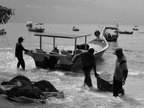 ~fresh catch~ image copyright Kris Lee 2012