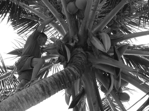 ~encounters under the coconut tree~ image copyright Kris Lee 2013