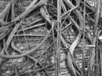 ~roots III~ image copyright Kris Lee 2012