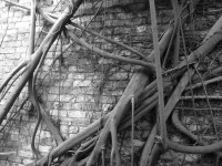 ~roots II~ image copyright Kris Lee 2012
