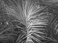 ~other palms~ image copyright Kris Lee 2012