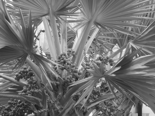 ~palms palms palms~ image copyright Kris Lee 2012